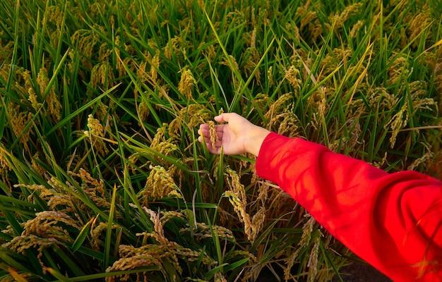 Девушка в красной куртке с зеленым полем Бесплатные Фотографии