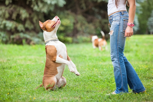 Молодая леди, играя с собакой на открытом воздухе. Premium Фотографии