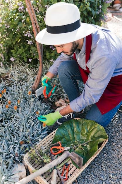 庭で花を収穫する若い男性庭師 無料写真