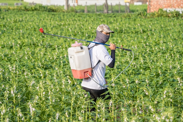 A young man farmer master is spraying pesticides (farm chemicals) on his own sesame field to prevent pests and plant diseases in the morning, close up, xigang, tainan, taiwan Premium Photo