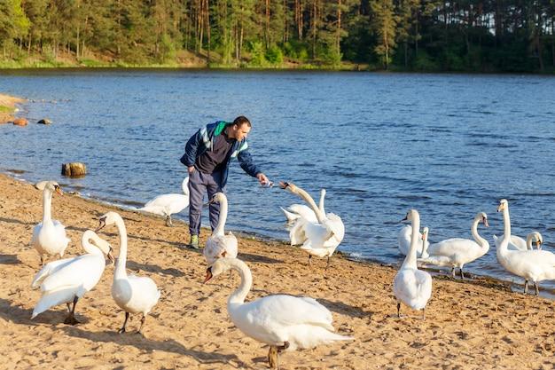 Young man feeding a white swan Premium Photo