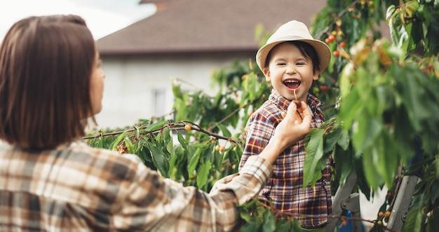 はしごを使って起き上がるために木からサクランボを食べる若い母親と彼女の息子 Premium写真