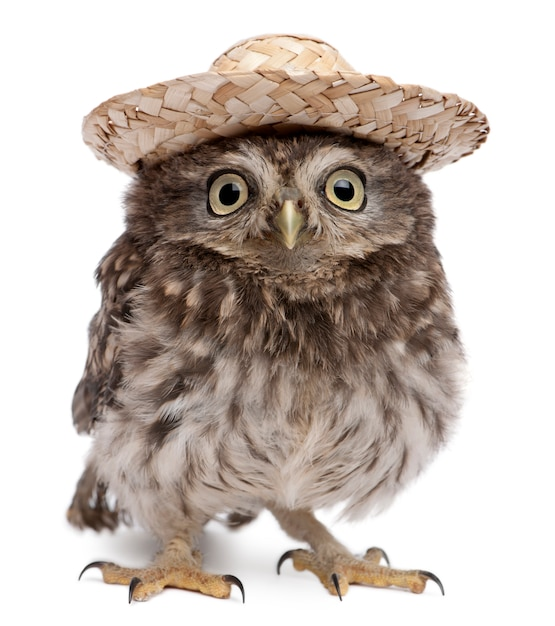 Young owl wearing a hat on white isolated Premium Photo