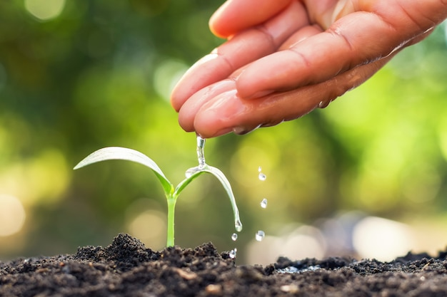 Young plant growing and hand watering in garden Premium Photo