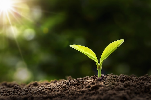 Young plant growing in morning light. agriculture and earth day concept Premium Photo