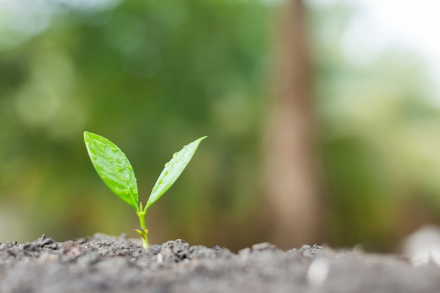Young plant growing in the morning light with green nature bokeh background Premium Photo