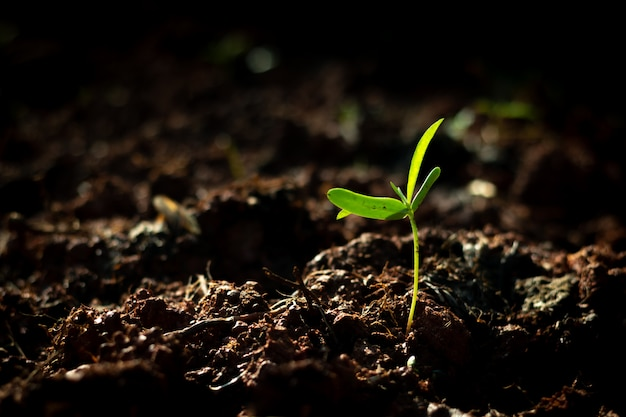 Young plant growing out from soil in the summer morning light Premium Photo