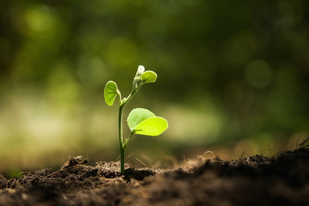 Young plant growing with sunshine in nature Premium Photo