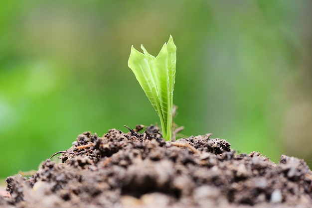 Young plant growth on neutral green Premium Photo