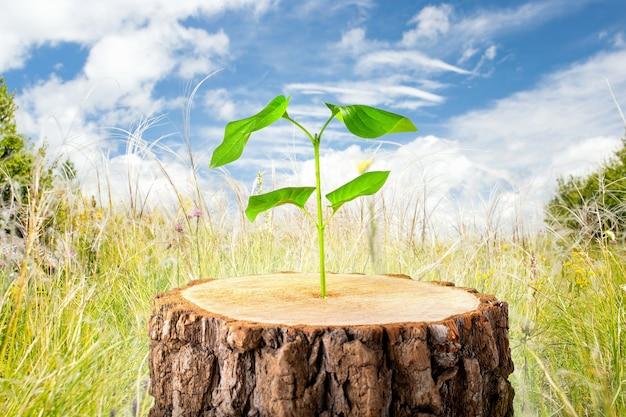 Молодое растение в старом лесу, концепция новой жизни. символическое развитие бизнеса. понятие экологии. Premium Фотографии