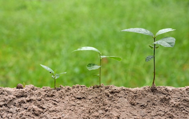 Young plants is growing in step on green nature background. Premium Photo