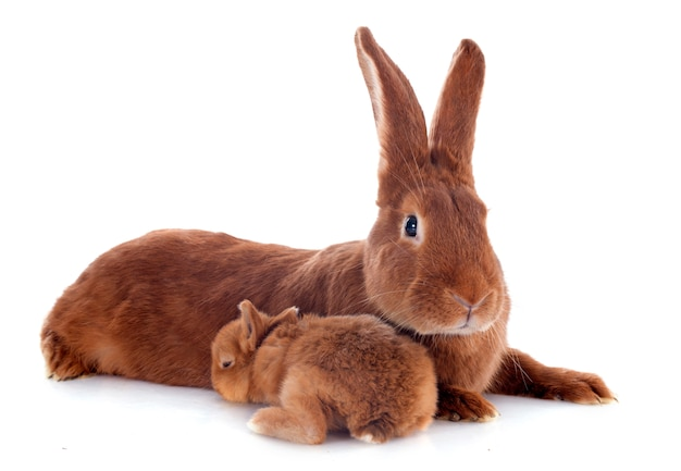 Young rabbit and mother Premium Photo