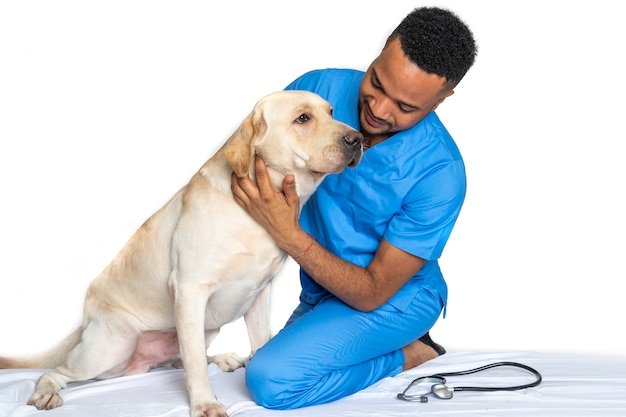 Young veterinarian with a labrador dog Premium Photo
