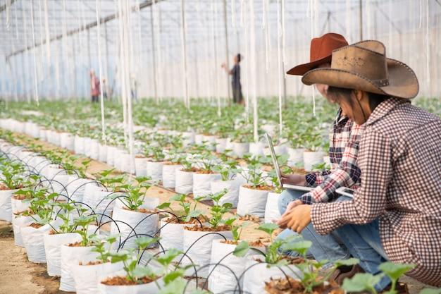 Young woman controlling a plantation Free Photo