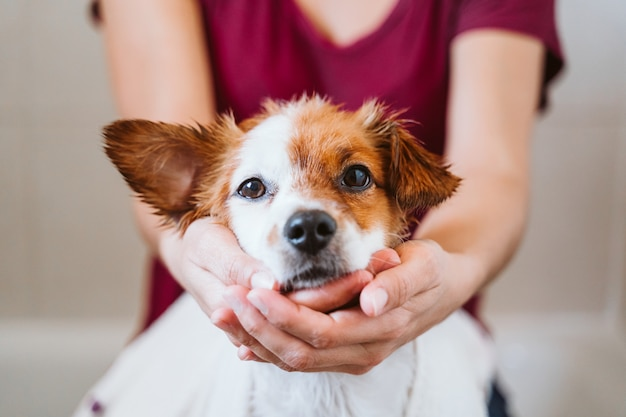 Young woman drying her cute small jack russell dog with towel at home Premium Photo