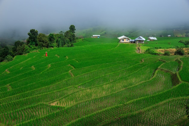 Young woman  relaxing in green rice terraces on holiday at pa bong paing village,  mae-jam chiang mai, thailand Premium Photo