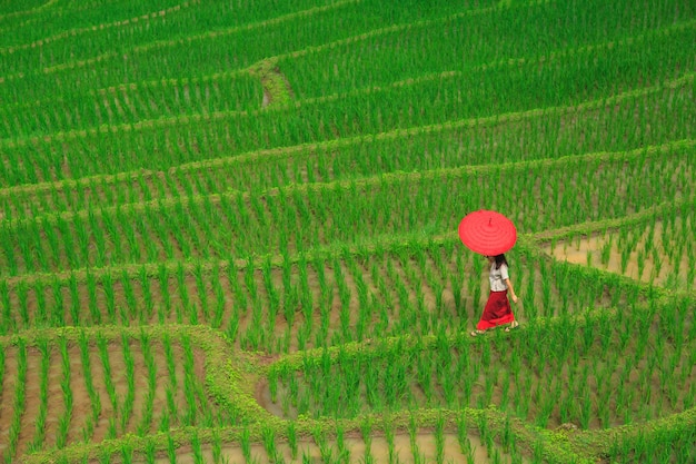 Young woman with red umbrella relaxing in green rice terraces Premium Photo