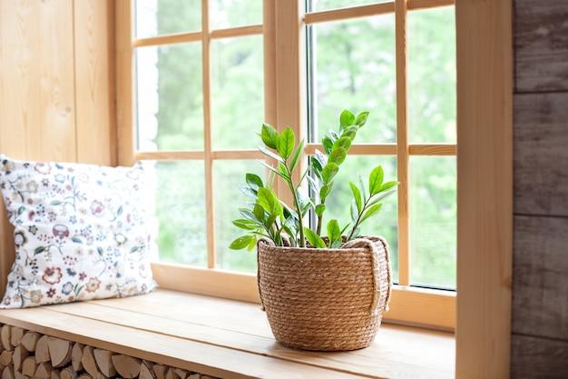 家の園芸の概念。窓辺の植木鉢のzamioculcas。窓辺の家の植物。 Premium写真