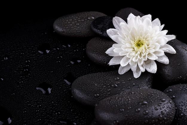 Zen basalt stones Premium Photo