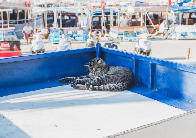 トルコのアンタルヤ、カスの地中海の町の露店でリラックスした怠zyな猫。 Premium写真