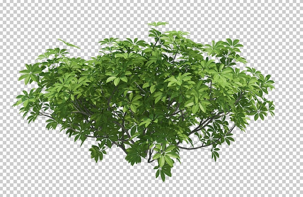 3d render brush tree isolated  on white Premium Psd