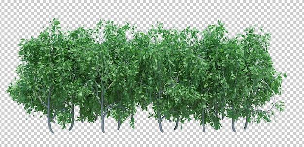 3d render brush tree isolated  on white Premium Psd