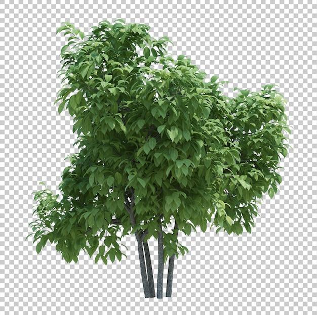 分離された3 dレンダリングブラシツリー Premium Psd