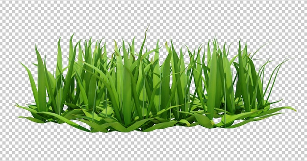 3d render of long green grass Premium Psd