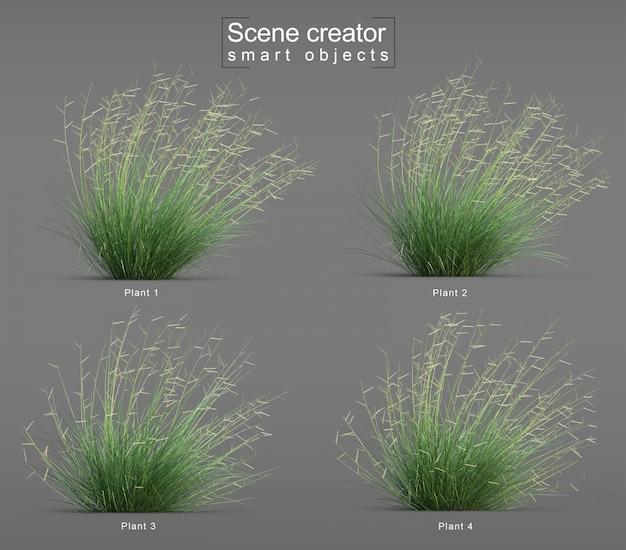 3d rendering of blonde ambition blue grama grass blow scene creator Premium Psd