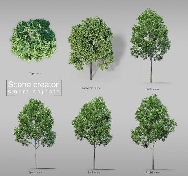 3d rendering of carrotwood trees Premium Psd