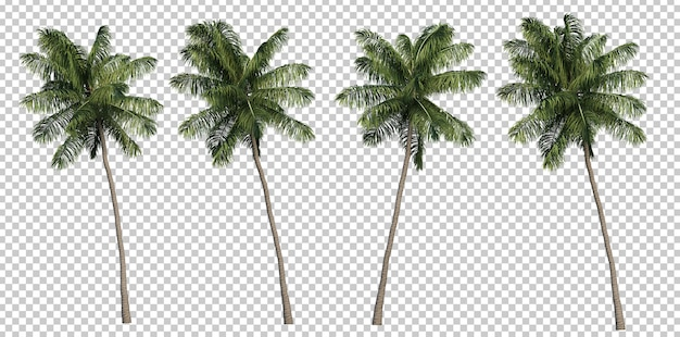 3d rendering of coconut palm trees Premium Psd