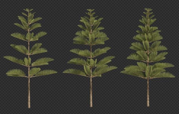 3d rendering of norfolk island pine Premium Psd