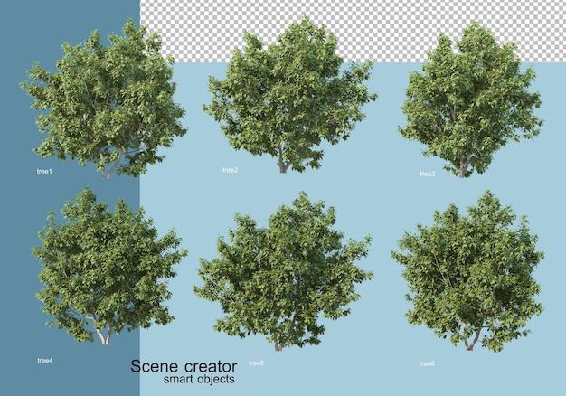 木と花の配置の3dレンダリング Premium Psd