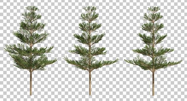 3d rendering of terminalia ivorensis trees Premium Psd