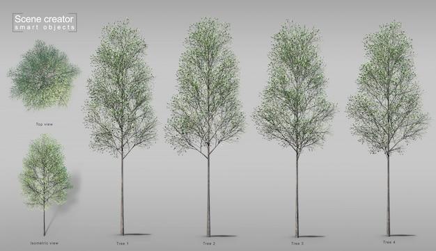 3d rendering of trees Premium Psd