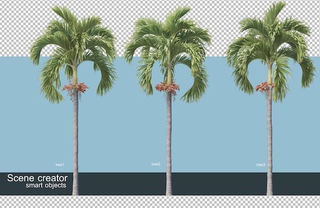 3d rendering of various species of trees Premium Psd