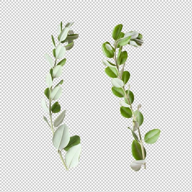 Листья эвкалипта изолированы Premium Psd