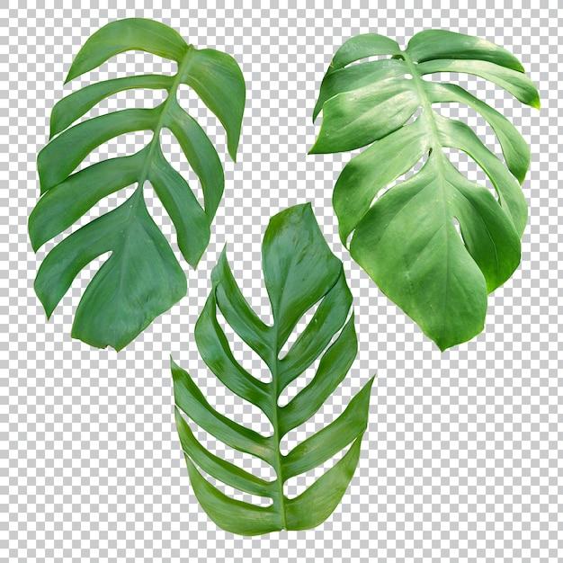 透明の熱帯植物 Premium Psd