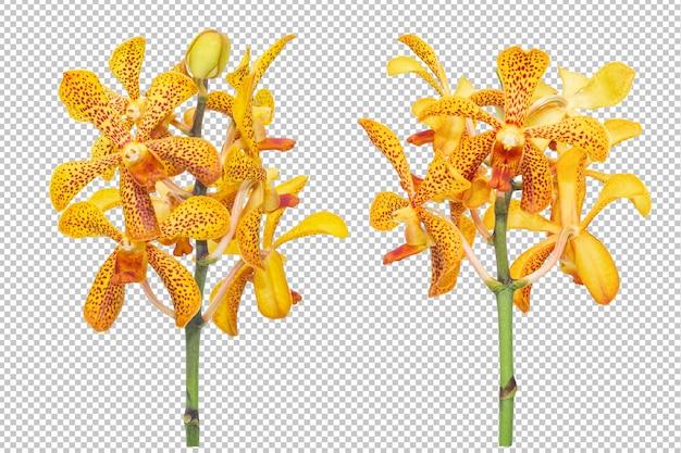 孤立した透明性に黄色オレンジ色の蘭の花の花束セット。花。 Premium Psd
