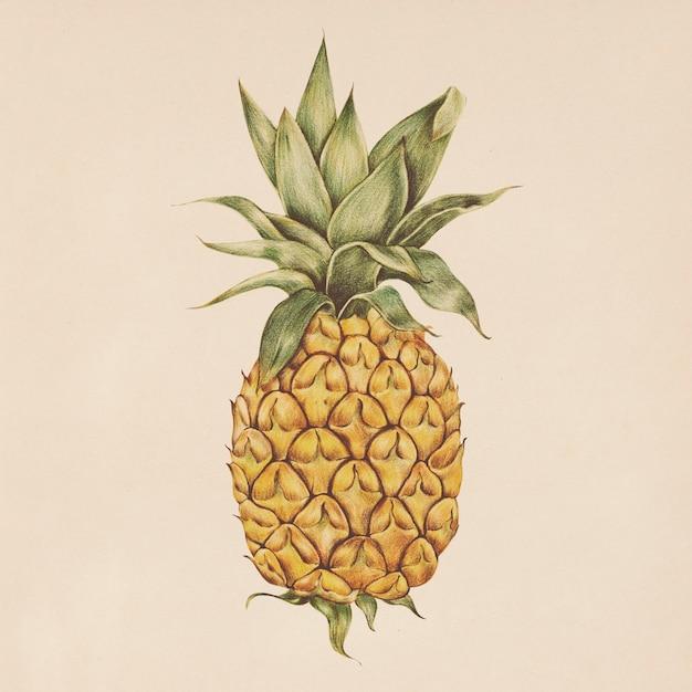 水彩スタイルのパイナップルのイラスト 無料 Psd