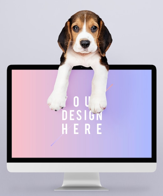 コンピューターモニターのモックアップと愛らしいビーグル犬の子犬 無料 Psd