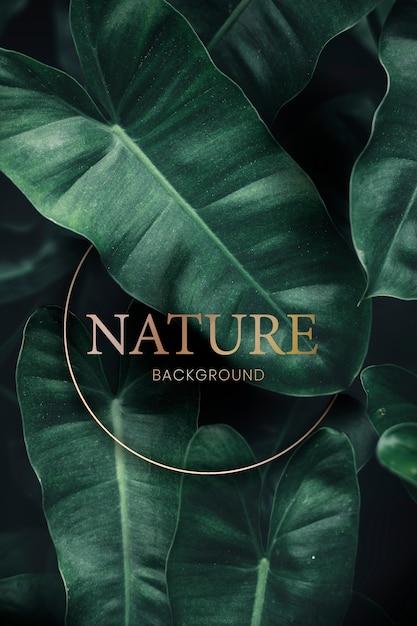 熱帯の緑の背景 Premium Psd