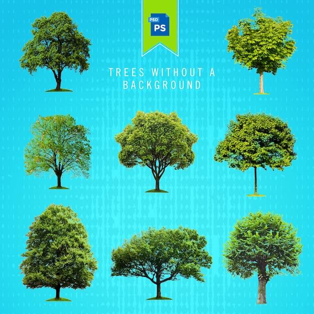 背景なしで分離された木 Premium Psd