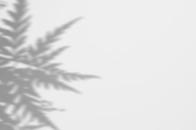 白い壁に葉の影シダの夏 Premium Psd