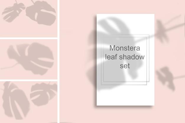 분홍색 벽에 몬스 테라 잎 그림자의 집합입니다. 사진 오버레이 또는 레이아웃을위한 흑백 여름. 프리미엄 PSD 파일