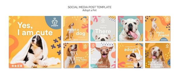 애완 동물 소셜 미디어 게시물 채택 프리미엄 PSD 파일