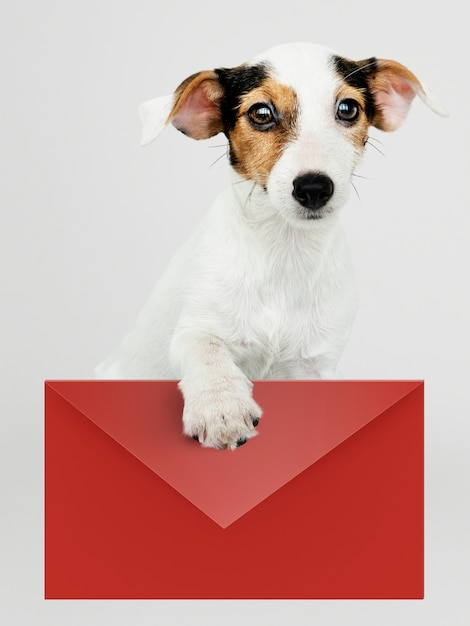 Adorable jack russell retriever puppy with a red envelope mockup Free Psd