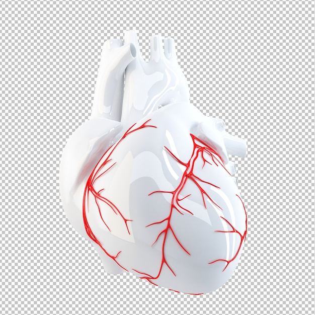 Anatomical illustration of human heart Premium Psd