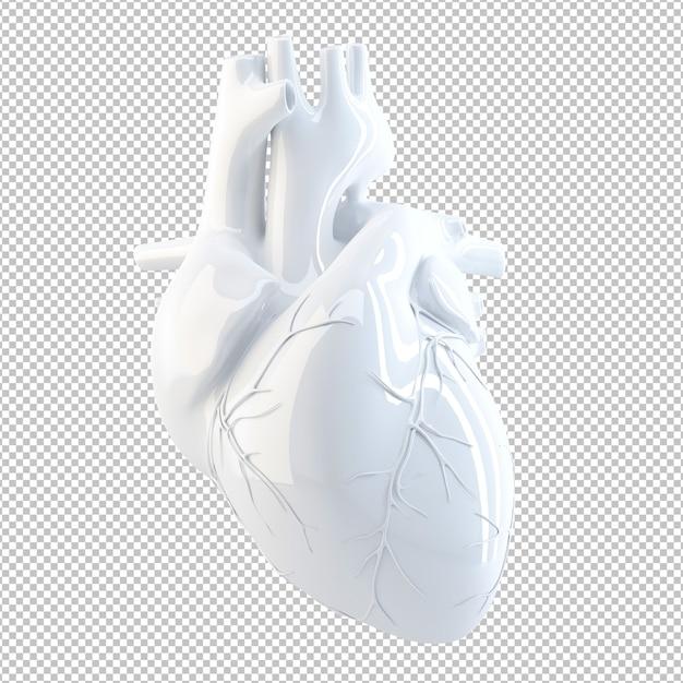 Anatomical illustration of human heart Premium Psd