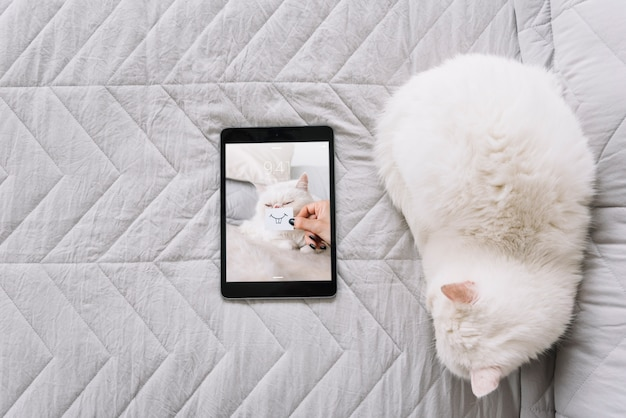Cat and tablet mockup on couch Free Psd